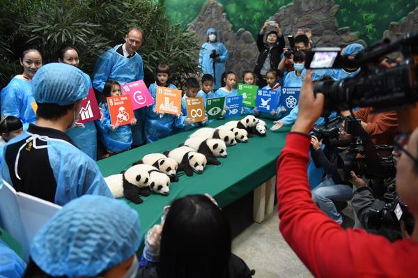 La presentación de estos pandas será lo más hermoso del fin de semana