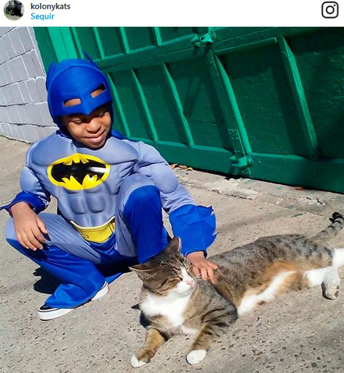 Con sólo 5 añitos, él ya es todo un superhéroe para los gatos sin hogar. ¡Mira cómo los ayuda!