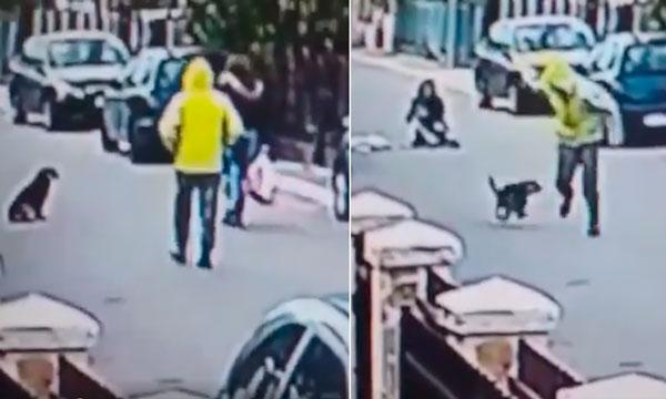 Un perro impide asalto a una mujer en la vía pública