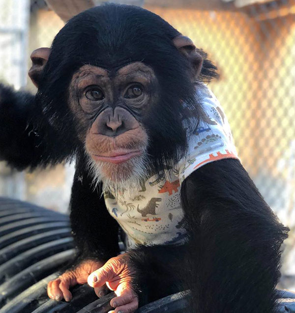 5523e778d Un tiempo después de entregarlo a un recinto animal para que tuviera  mejores cuidados
