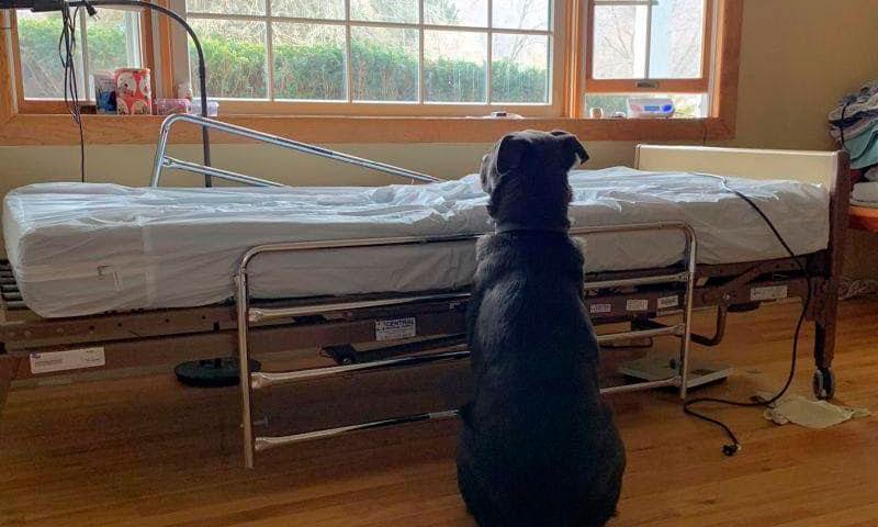 Perrito espera a su dueño en la cama de hospital donde falleció