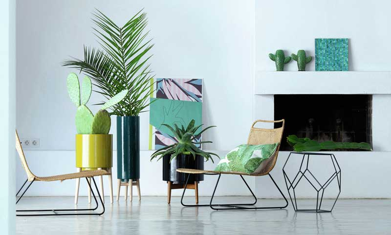 Ideas para decorar con plantas y flores for Decoracion con plantas en living