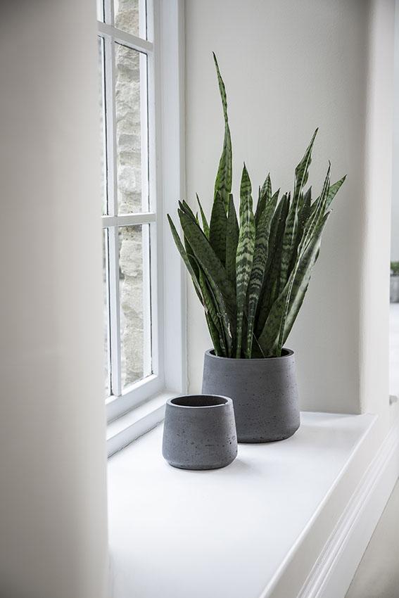 Plantas de interior para decorar el cuarto de baño - Foto 1
