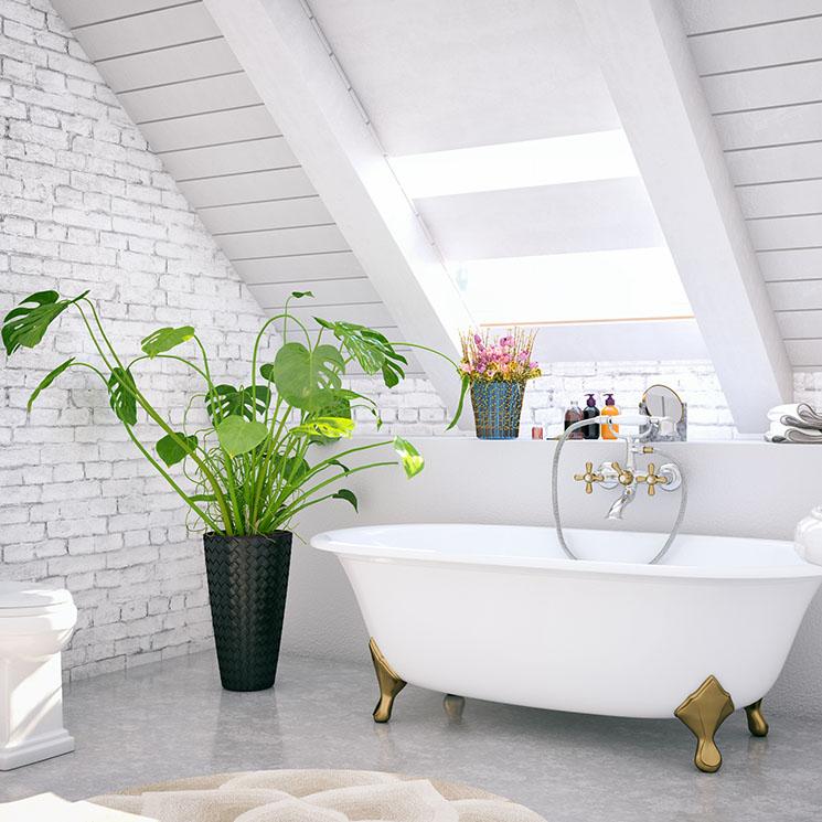 Plantas de interior para decorar el cuarto de baño - Foto 8