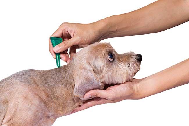 Qué son las pipetas para perros y cuando utilizarlas