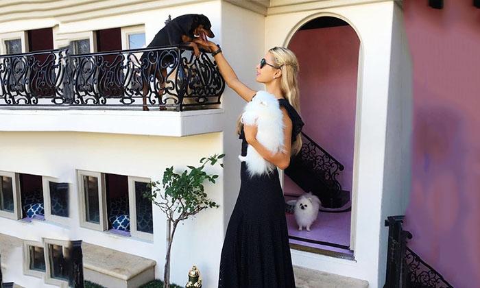 Paris Hilton Y La Mini Mansión De Sus Perritos Foto 1