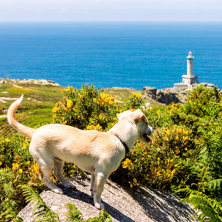 Doce destinos «pet friendly» para viajar en 2021 con tu mascota